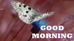 Butterfly Good Morning Images Pictures Wallpaper