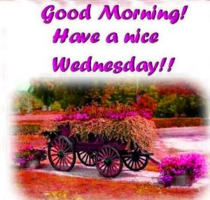 Wednesday Good Morning Images Photo HD Download
