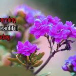 135+ Tuesday Good Morning Images Photo Wallpaper Pics Download