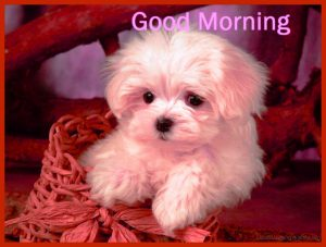 Puppy Lover good morning Images Pics Download