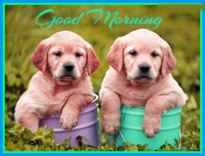 Puppy Lover good morning Images Photo Wallpaper Download