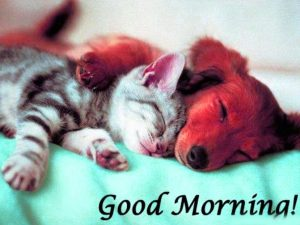 Puppy Lover good morning Images Photo Wallpaper Pics Download for Whatsaap