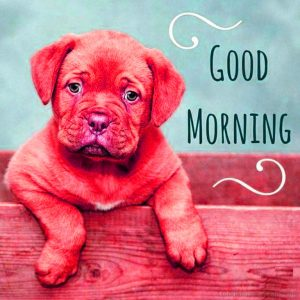 Puppy Lover good morning Images Wallpaper Photo Download