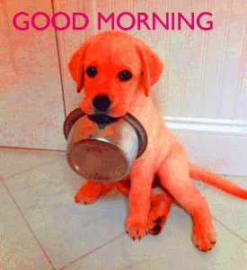 Puppy Lover good morning Images Photo Wallpaper