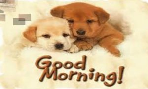 Puppy Lover good morning Images Wallpaper Pics Download