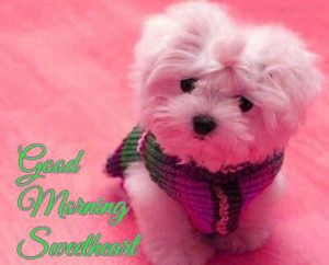Puppy Lover good morning Images Photo Pics Download