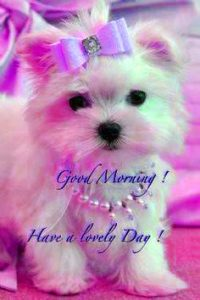 Puppy Lover good morning Images Photo Pics HD Download