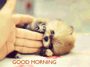 Puppy Lover good morning Images Pictures HD Download