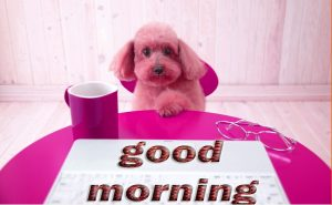 Puppy Lover good morning Images Photo Wallpaper Pics Download
