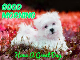 Puppy Lover good morning Images Photo Wallpaper HD Download
