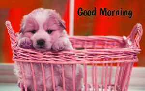Puppy Lover good morning Images Photo Pics Download for Whatsaap