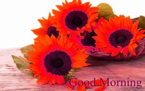 Sunflower Good Morning Images Photo Pictures Download