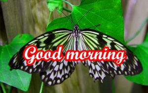 Butterfly Good Morning Images Wallpaper Pic HD Download