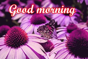 Butterfly Good Morning Images Pictures Download