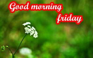 Friday Good Morning Images Wallpaper Pics Download