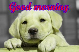Puppy Lover good morning