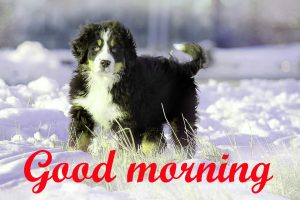 Puppy Lover good morning Images Pics