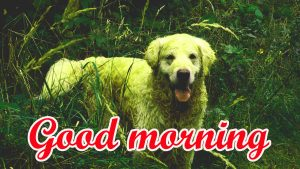 Puppy Lover good morning Images Pics HD