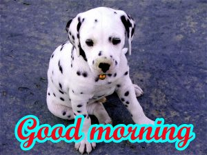 Puppy Lover good morning Photo Pictures Download