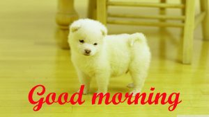 Puppy Lover good morning Pictures Pics HD