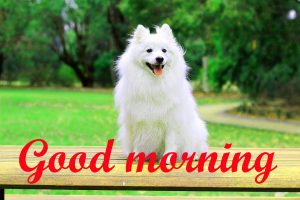 Puppy Lover good morning Images Photo Pics