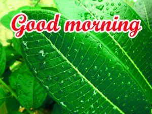 Rainy Day Good Morning Images Wallpaper