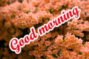 Spring Good Morning Images Wallpaper Free Download