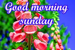 Sunday Good Morning Images Wallpaper