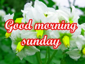 Sunday Good Morning Images Wallpaper HD