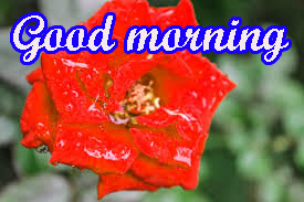Tuesday Good Morning Images Pics HD Download