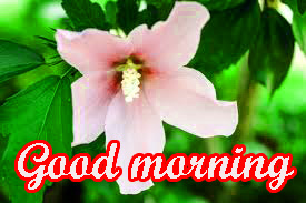 Tuesday Good Morning Images Pictures Download