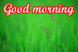 Tuesday Good Morning Images Wallpaper
