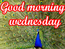 Wednesday Good Morning Images Wallpaper
