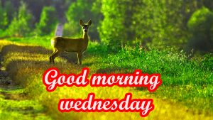 Wednesday Good Morning Images Wallpaper Photo Pics Download