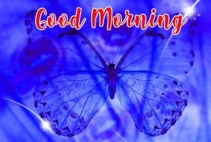 Beautiful Butterfly Good Morning Images Wallpaper Photo Download