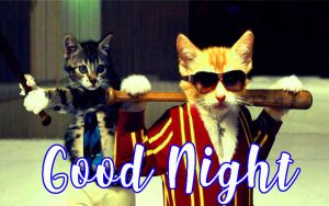 Funny Good Night images Pictures Photo Wallpaper Free HD Download