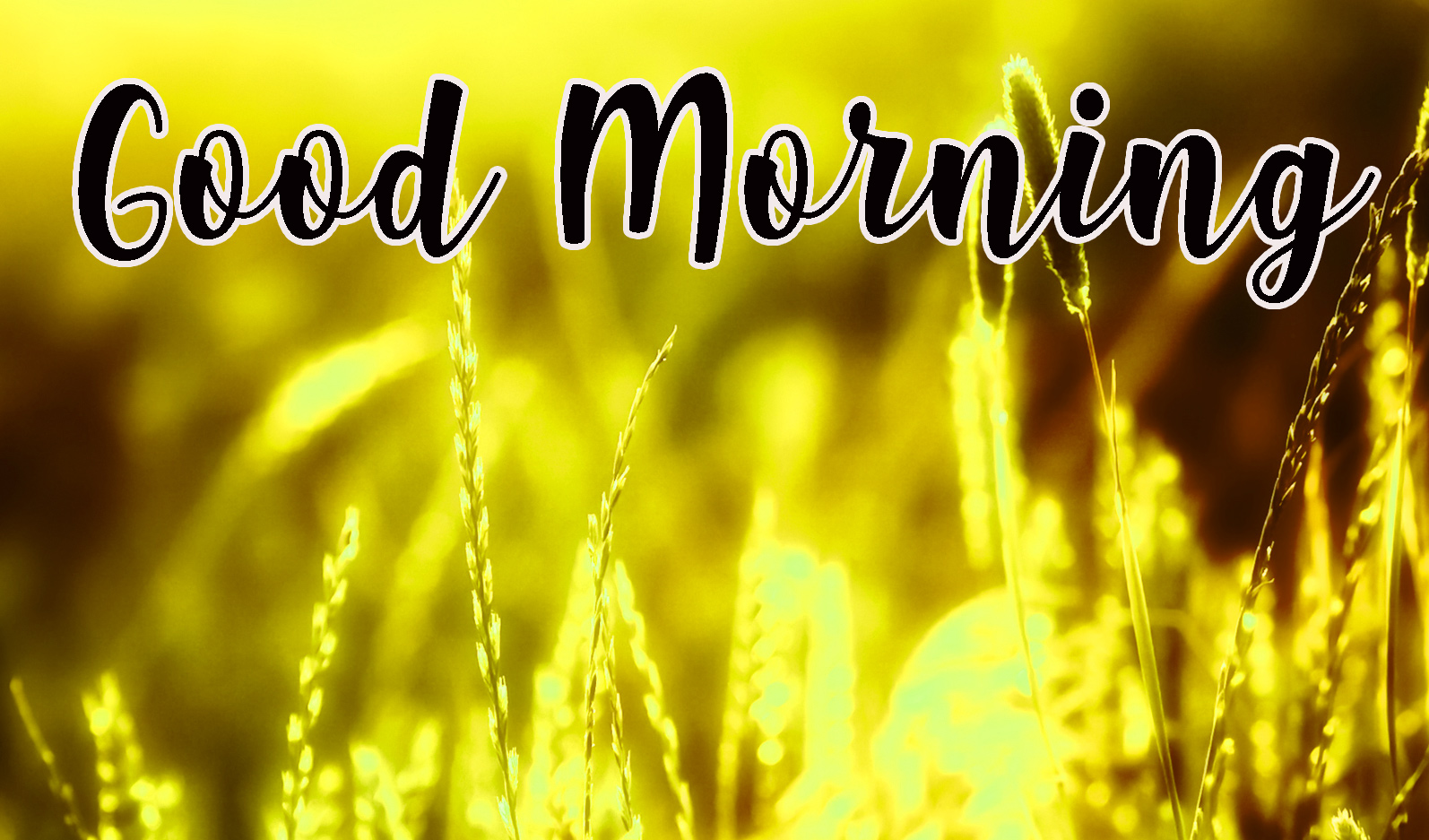 155+ Good Morning Gorgeous Images Wallpaper Photo Pics HD Download