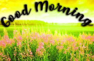 Good Morning Sunshine Images Wallpaper Pictures Photo Free HD Download