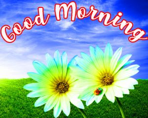 Good Morning Sunshine Images Pictures Photo Wallpaper Free Download