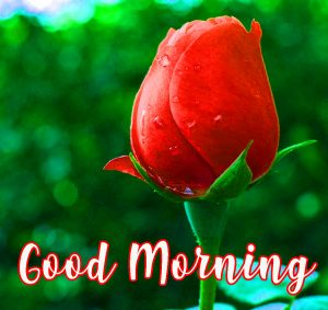 Gud Morning Images Pics Photo Wallpaper Pictures free Download