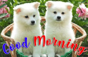 Puppy Lover Good morning Images Wallpaper Pictures Photo Pics Free HD Download