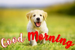 Puppy Lover Good morning Images Pictures Photo Wallpaper Pics Free HD