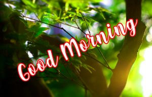 Special gd gud mrng Images Pictures Photo Wallpaper Free HD