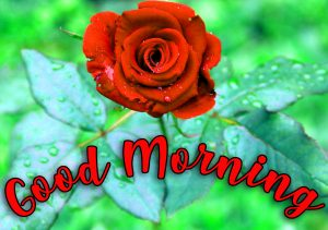 Good Morning Images Pictures Photo Wallpaper Download With Red Rose
