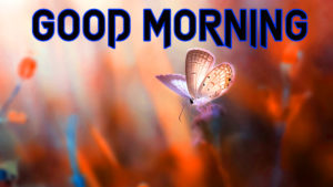 Butterfly Good Morning Images pictures photo free download