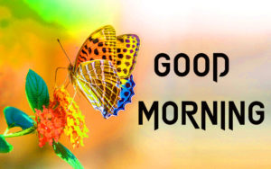 Butterfly Good Morning Images pictures pics hd