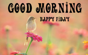 Friday Good Morning Images pictures photo hd download