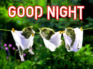 Funny Good Night Images photo wallpaper hd