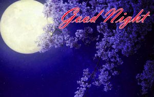 New Beautiful Good Night Images Wallpaper Pics Download For Facebook