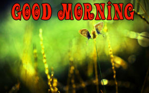 Special gd gud mrng Images picture photo hd download